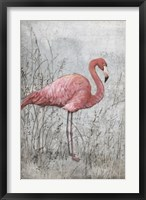 Framed American Flamingo I