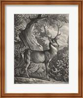 Framed Woodland Deer I