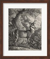Framed Woodland Deer I