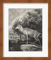 Framed Woodland Deer II