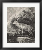 Framed Woodland Deer II