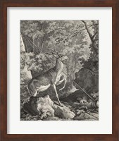Framed Woodland Deer VII