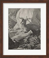 Framed Woodland Deer VIII