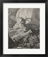 Framed Woodland Deer VIII