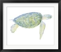 Framed Tranquil Sea Turtle I