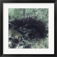 Coral & Jelly Fish I Framed Print