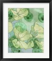 Framed Mint Progeny III