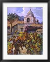 Framed Vineyard at San Miguel