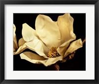 Framed Buttercream Magnolia I