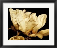 Framed Buttercream Magnolia II