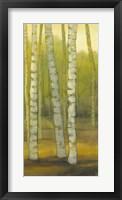 Sunny Birch Grove II Framed Print