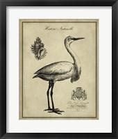 Framed Antiquarian Egret