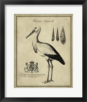 Framed Antiquarian Stork