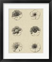 Framed Floral Rosette I