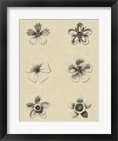 Framed Floral Rosette II
