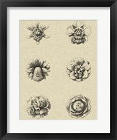 Framed Floral Rosette III