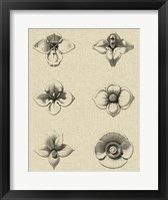 Framed Floral Rosette IV