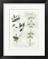 Framed Oregano & Mint