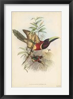 Framed Tropical Toucans III