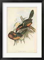 Framed Tropical Toucans V