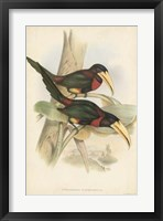 Framed Tropical Toucans VII