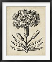 Framed Distinguished Floral II