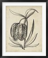 Framed Distinguished Floral IV