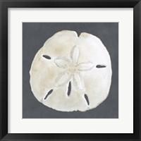Framed Shell on Slate II