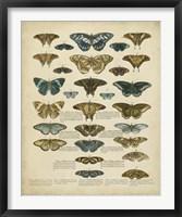 Framed Tabula de Papilio