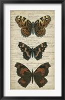 Butterfly Script II Framed Print