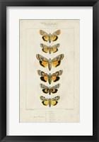 Pauquet Butterflies I Framed Print