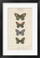 Pauquet Butterflies V Framed Print