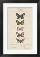 Framed Pauquet Butterflies VI