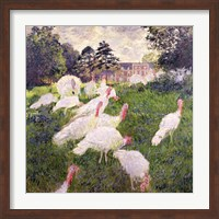 Framed Turkeys at the Chateau de Rottembourg, Montgeron, 1877