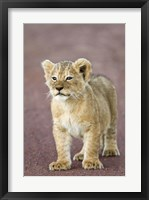 Lion Framed Art Amp Framed Lion Art Buy At Framedart Com