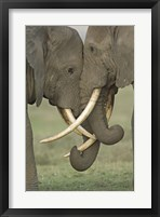 Framed Two African elephants, Arusha Region, Tanzania