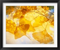 Framed Selective focus close up of golden yellow autumn leaves