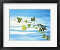 Framed Green vine floating in blue water