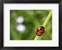 Framed Ladybug on a stem