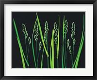 Framed Green Grass Reeds on Black Background