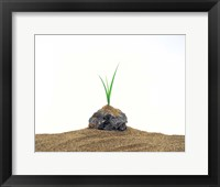 Framed Grass Growing From Stone Settled In Sand