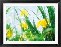 Framed Yellow flowers with grass an sky