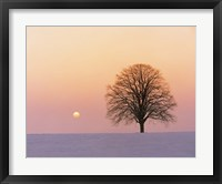 Framed Sunset view of single bare tree