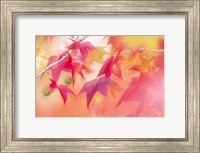 Framed Red Leaves with Backlit, Autumn