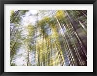Framed Sunlight in Bamboo Forest