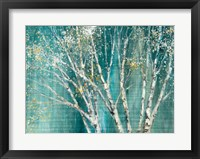 Framed Blue Birch