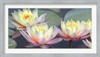 Framed Lotus Panorama