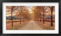 Framed Napa Lane