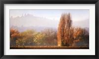 Framed Vineyard Mist