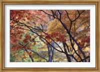 Framed Lithia Park Fall 3